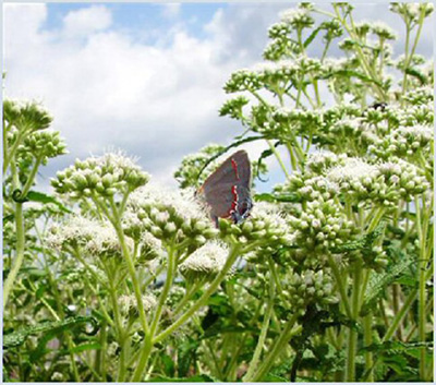 Delicieux Butterfly Gardening With Native Plants And Butterfly Garden Certification  Program
