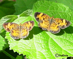 Butterfly Gardening Information For An Area That Includes Urban, Suburban,  And Rural Communities.