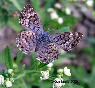 North American Butterfly Association