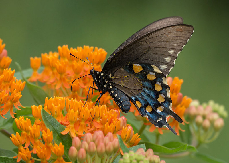 Butterfly Sightings