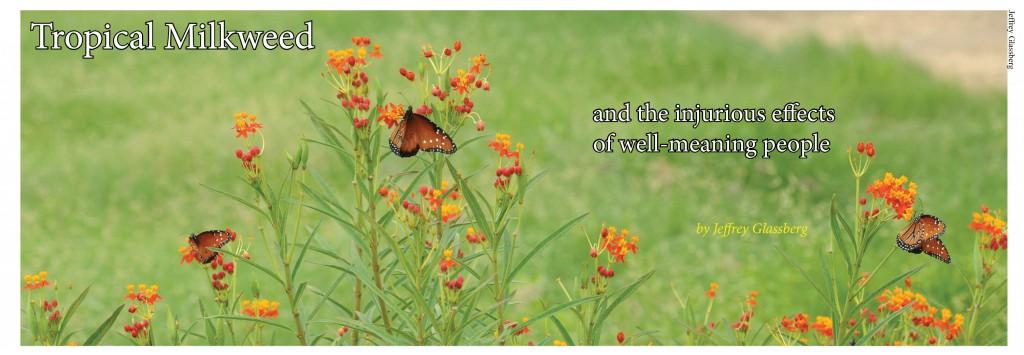 Tropical Milkweed American Butterflies